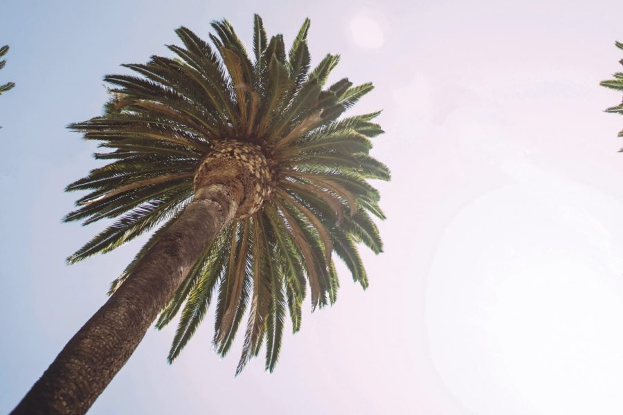 palm trees around campus